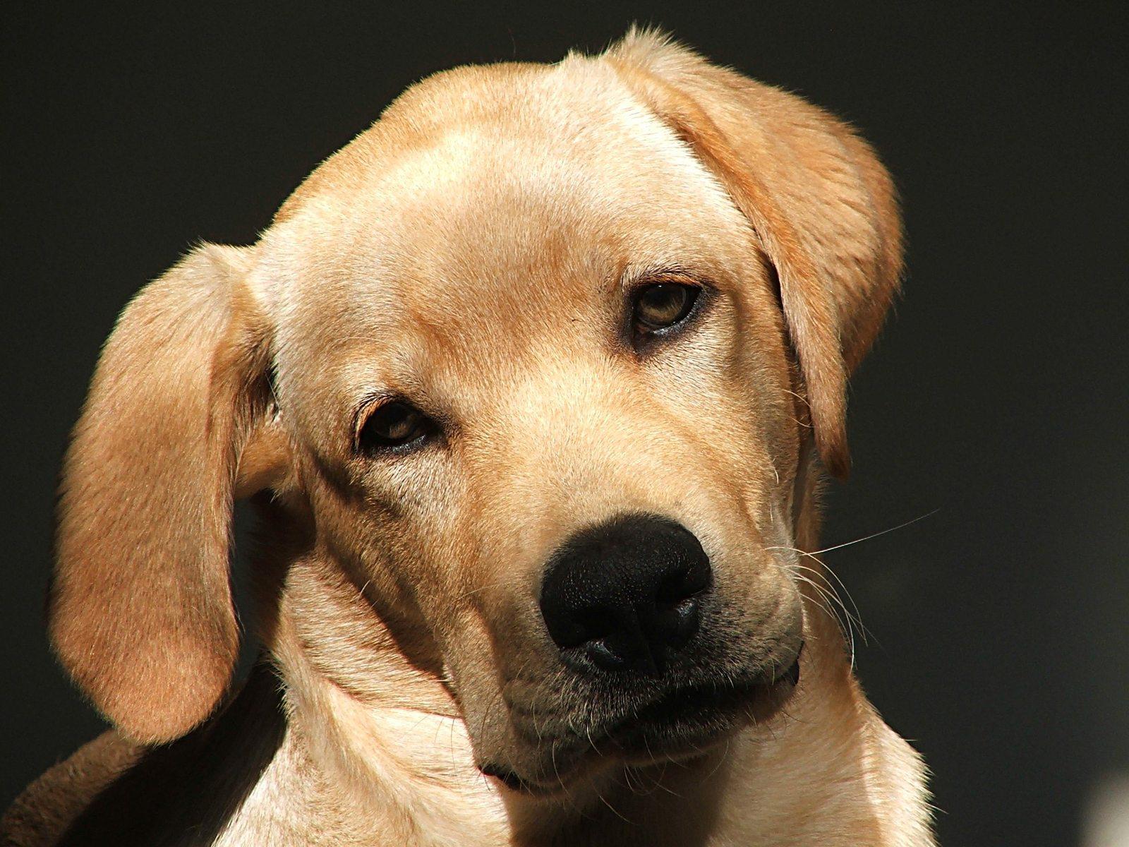 estate planning for pets